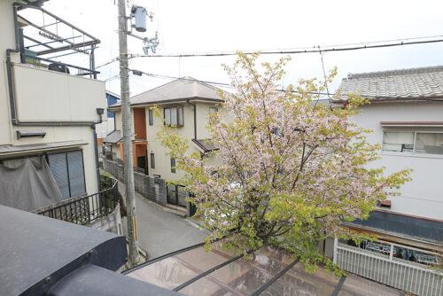 バルコニーからの眺望です。お庭には桜の木があり、バルコニーから望めます。